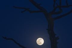 Super Moon on 2021-04-26